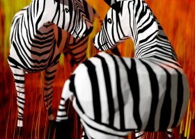zebra-compo12